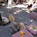 Das Kaninchengehege