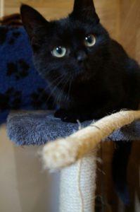 Schwarze Katze Katie