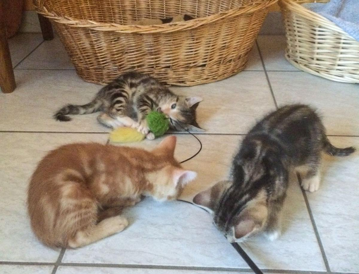3kittenplay