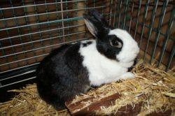 Kaninchen Fiona