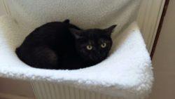 Scheues Kätzchen sucht ein Zuhause