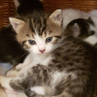 Unsere Katzenwelpen können bald umziehen