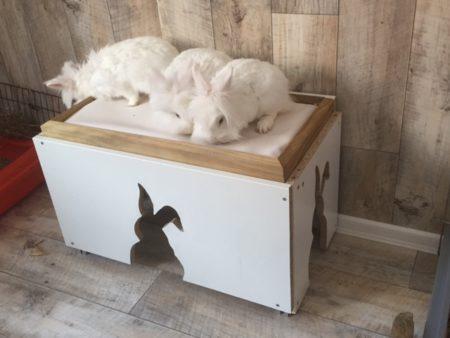 Kaninchen für Innenhaltung