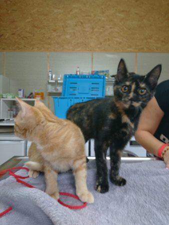 Katzenmädchen möchten umziehen
