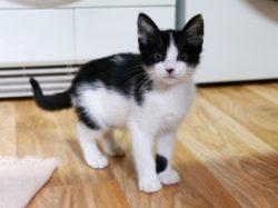 Kitten suchen ein Zuhause