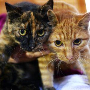 Die Geschwister Marga und Moritz suchen ein ruhiges Zuhause