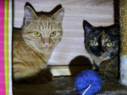 Die Geschwister Marga und Moritz suchen ihre Menschen zum Spielen