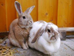Kaninchen suchen Artgerechtes Zuhause