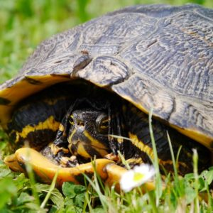 Morla trauert um ein Leben in der Natur