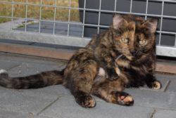 Katzendame sucht Kuschelplatz