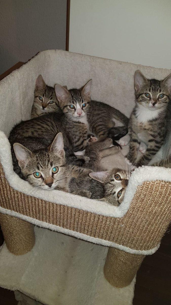 Kitten zu vermitteln