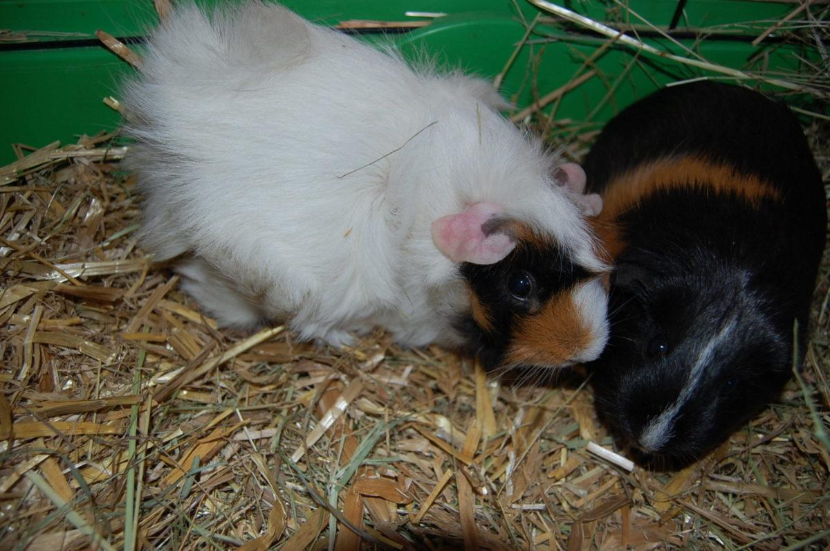 Frederike und Rosa