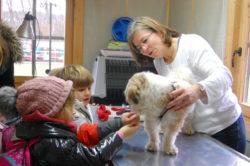 Was macht ein Tierarzt so?