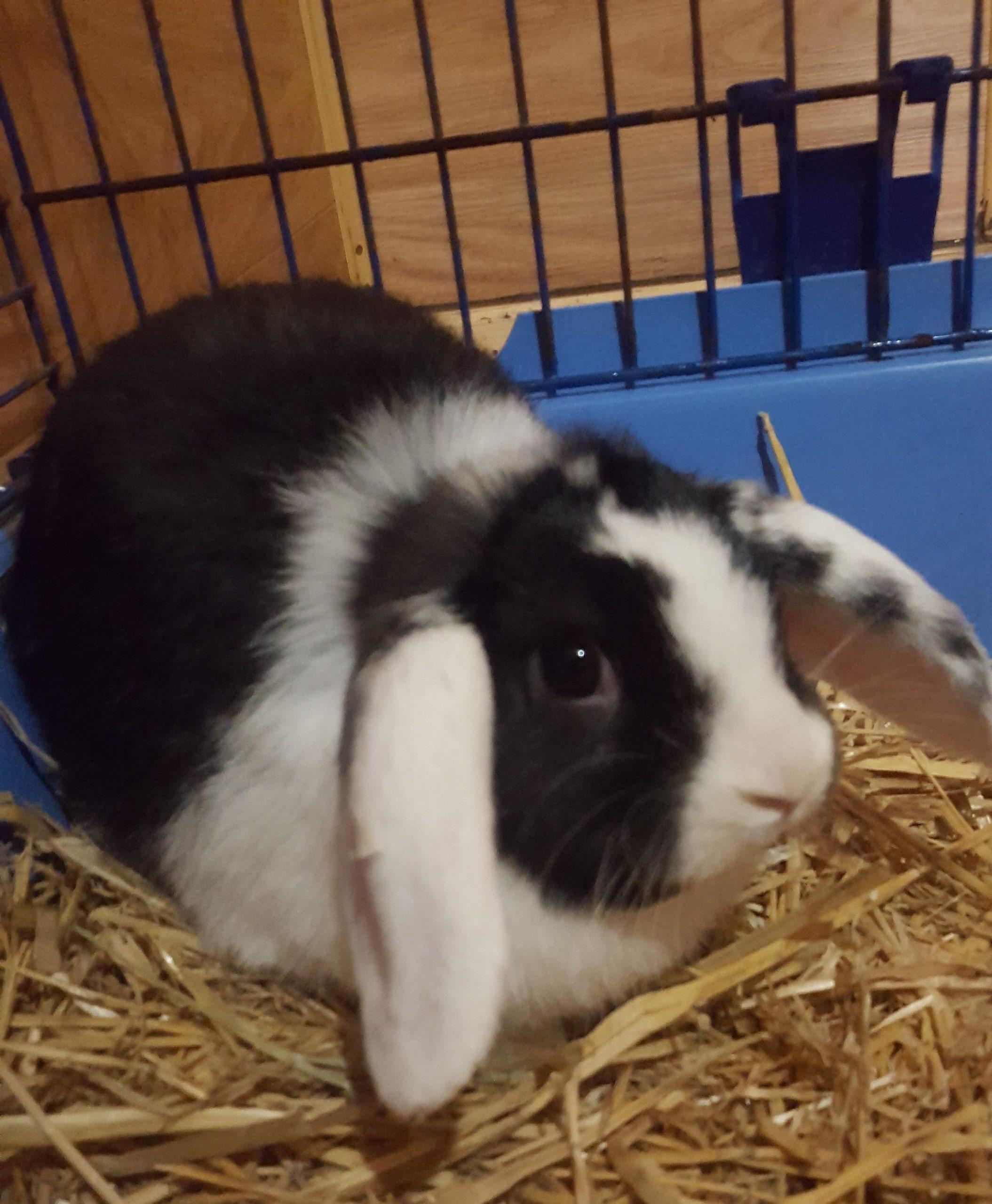 Jack-Kaninchen-2