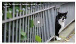 Viele Probleme mit freilebenden Katzen