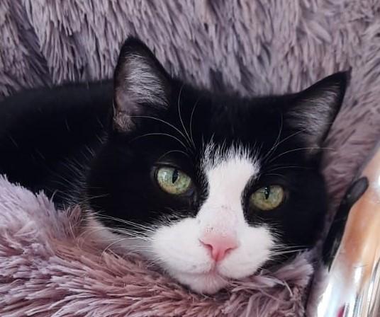 Kitty- junggebliebene Seniorin