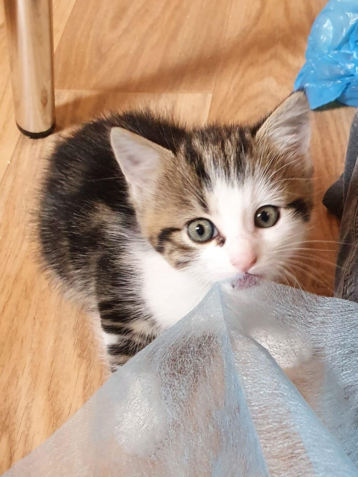 Kitten-Leni-0