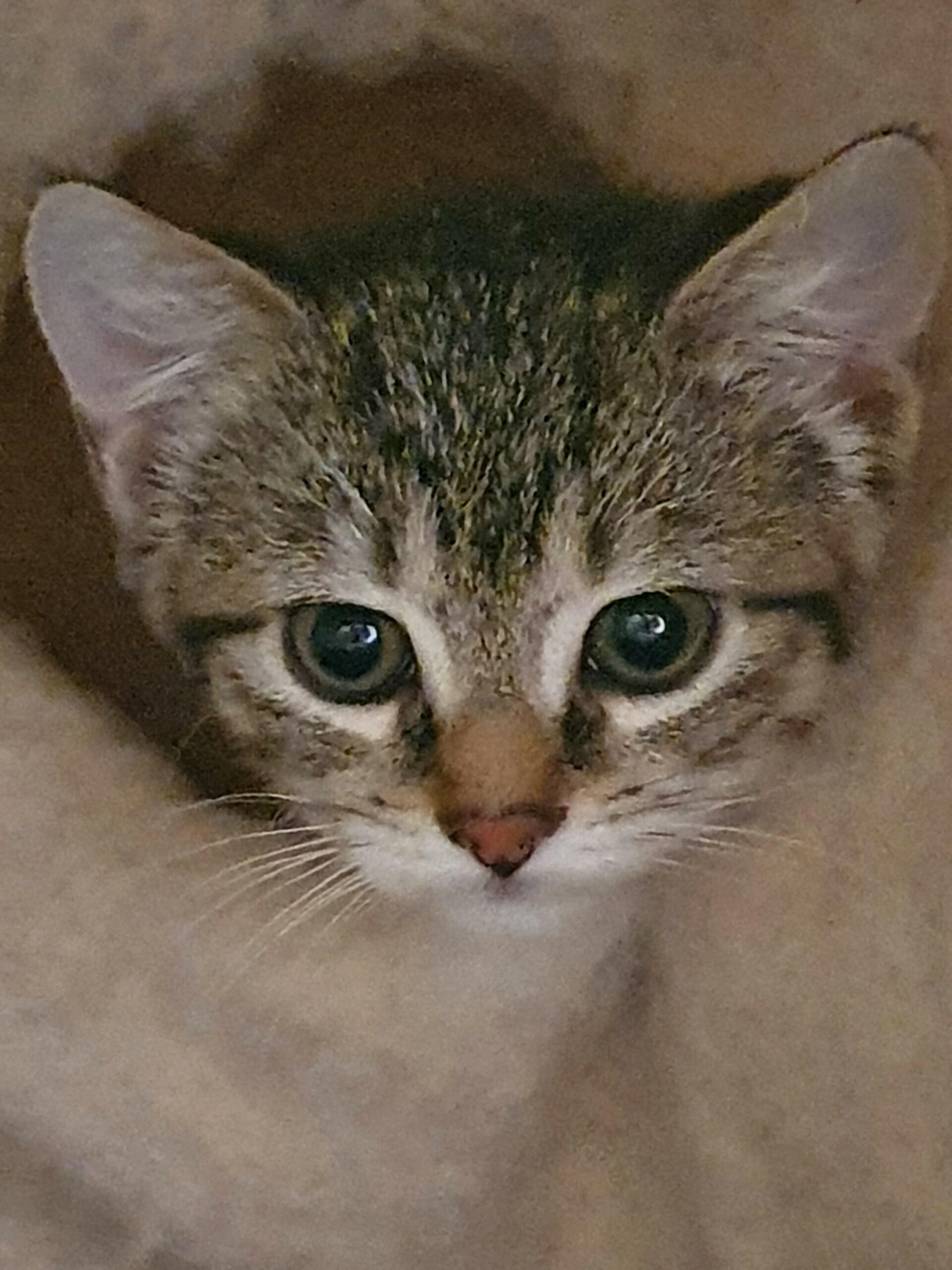 Kitten-Leni-11