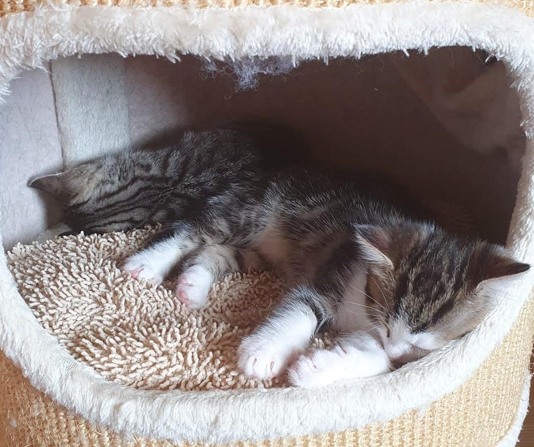 Kitten-Leni-2