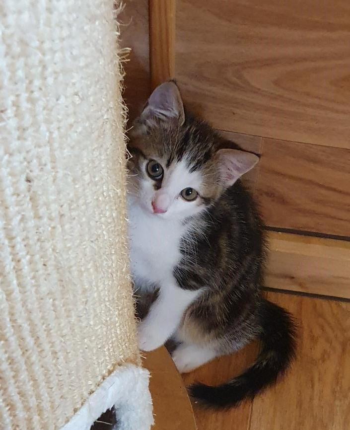 Kitten-Leni-4-2