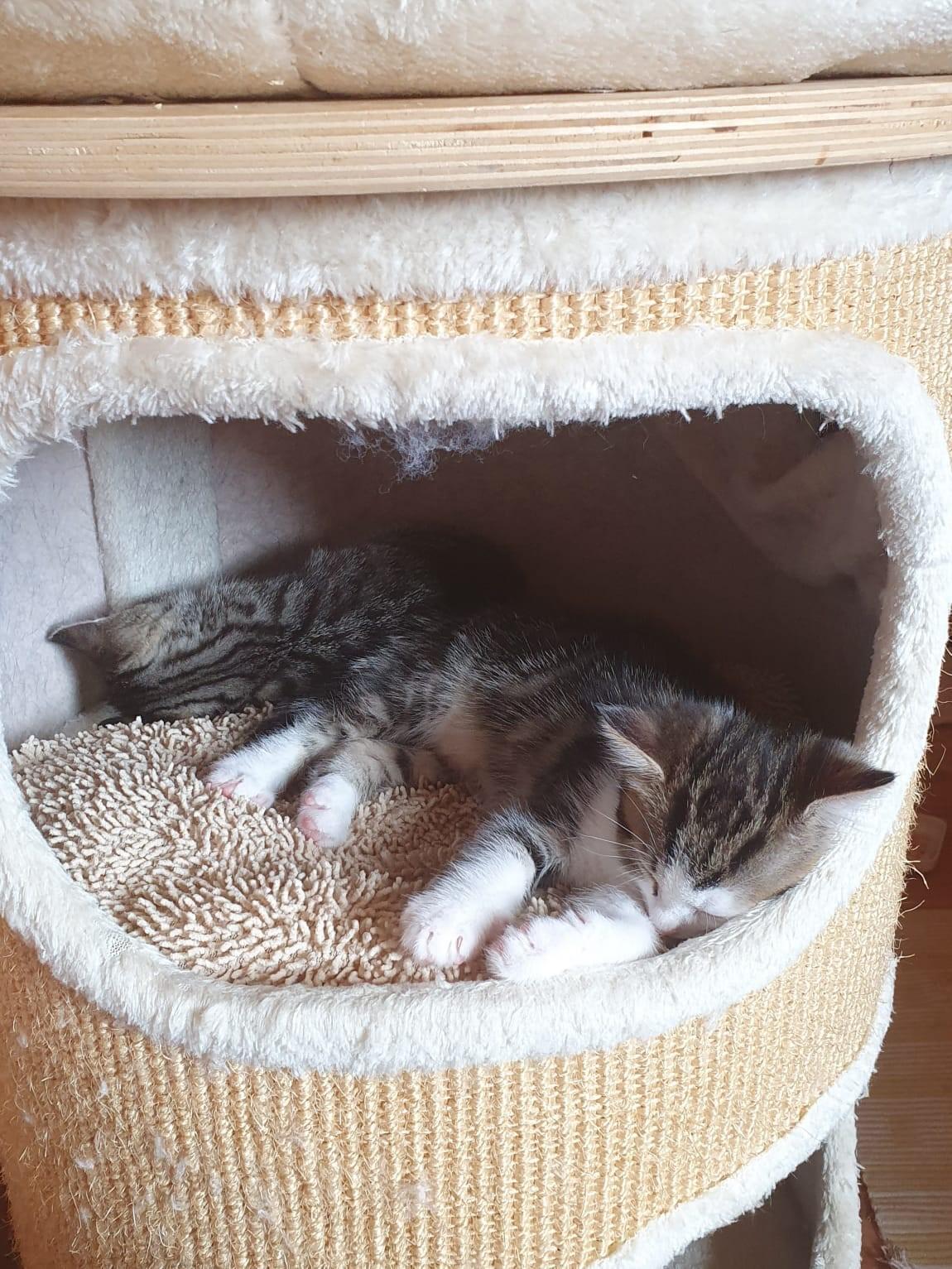 Kitten-Leni
