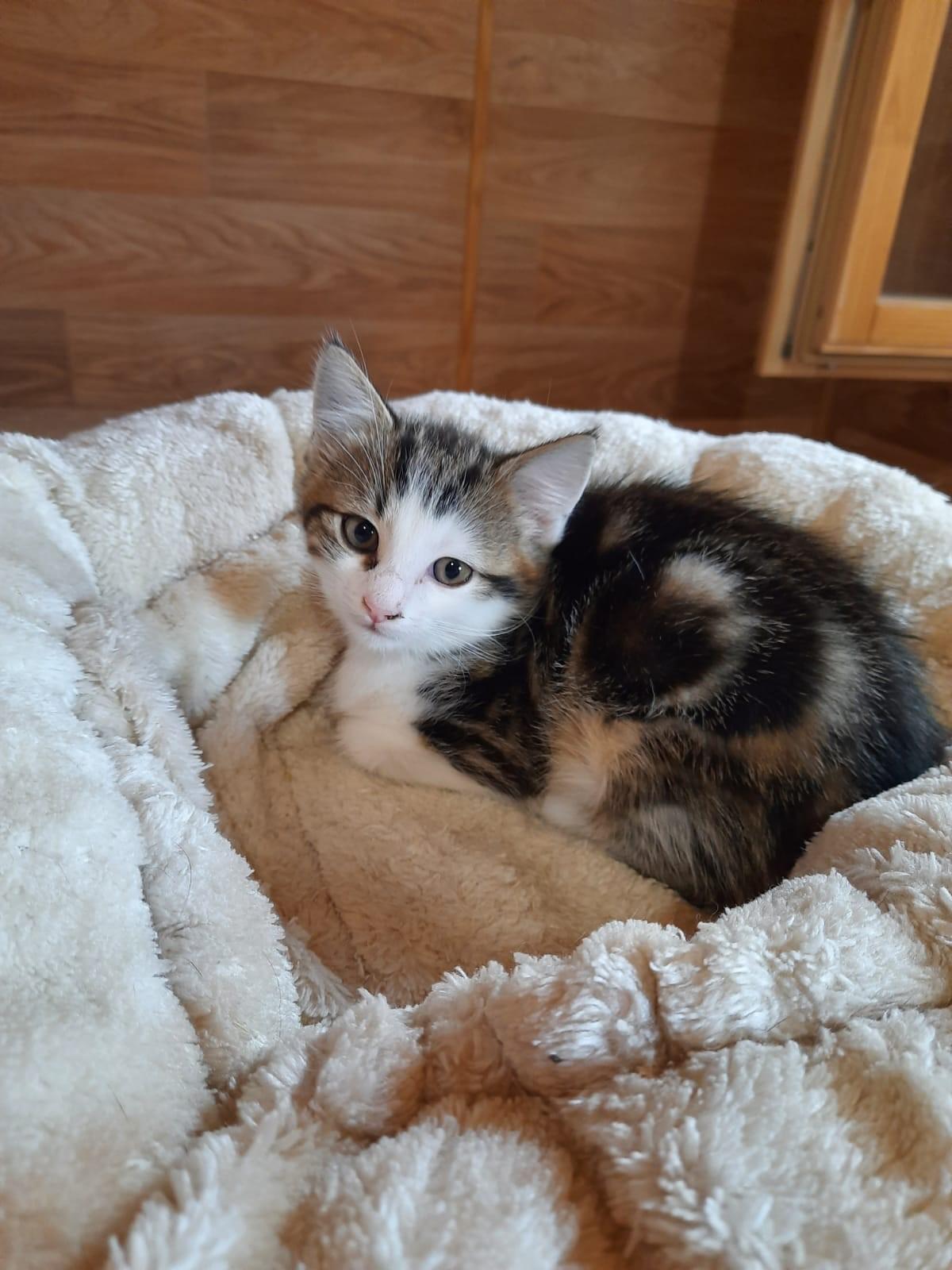 Kitten-Leni3